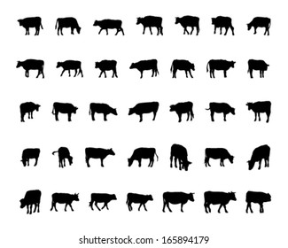 Vector of cow / dairy cattle Silhouettes