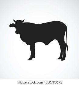 Vector of cow on white background. Vector Cow for your design.