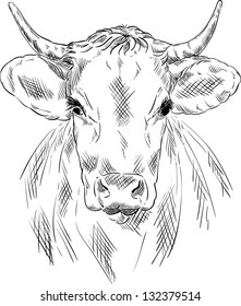 vector - cow portrait isolated on background