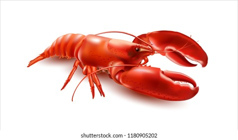 Vector Crayfish.3d vector illustration on white background.