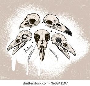 Vector crow skull