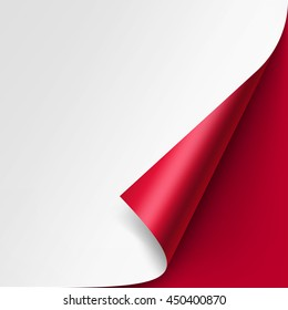 Vector Curled corner of White paper with shadow Mock up Close up Isolated on Red Background