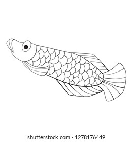 Vector of cute arowana in black and white. EPS10 format.
