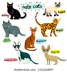 Vector cute cat.Set of cartoon animal characters. Hand drawn Illustration  breeds of cats