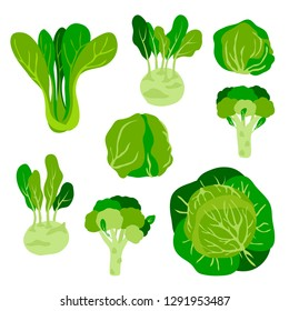 vector cute  childish green vegetables cabbage set on bok choy kohlrabi broccoli salad iceberg white for your design menu cafe farmer market
