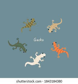 Vector cute colorful gecko illustration set