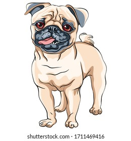 Vector cute dog pug breed fawn color