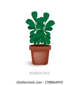 Vector cute houseplant hand drawn. Home plant for interior decor of home and office. Rubber Tree in a brown pot.  Vector illustration isolated on white background.  House plant for your design.