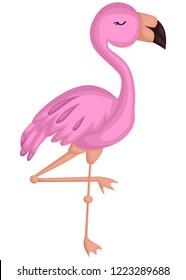 a vector of a cute pink flamingo bird