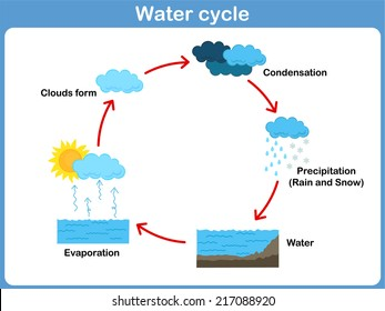 Vector Cycle of water for kids