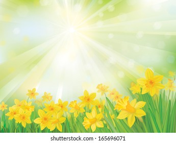 Vector of daffodil flowers on sky background.