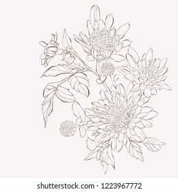Vector dahlia flower. Autumn flowers bouquet.  Element for design. Hand-drawn contour lines and strokes.