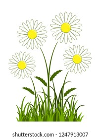 vector daisies in grass isolated on white background