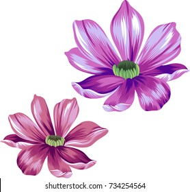 vector daisies, isolated elements. beautiful classic daisy.