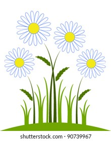 vector daisies on white background