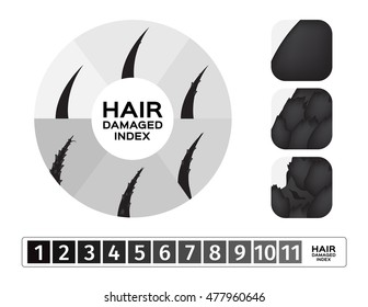 vector , damaged hair index and infographic