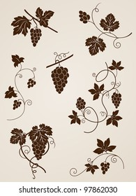 vector decorative grape vine elements for design
