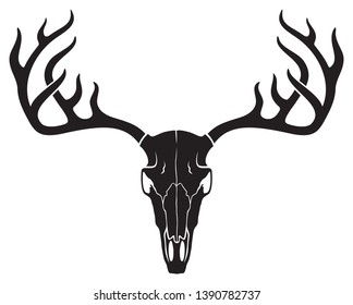 vector deer skull with horns