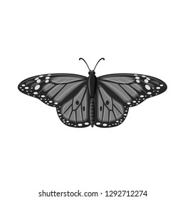 Vector design of butterfly