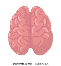 Vector design of cerebrum and hemisphere icon. Graphic of cerebrum and gyrus stock vector illustration.