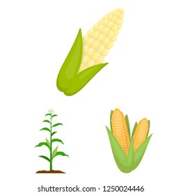 Vector design of corn and leaf icon. Set of corn and sweet vector icon for stock.