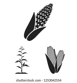Vector design of corn and leaf sign. Collection of corn and sweet stock vector illustration.