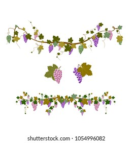 Vector design elements with bunches of grapes and vines in vintage style. frame, border of grape branches with bunches of grapes. Isolated on white background.