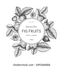 Vector design with hand drawn figs sketch. Vinatge frame with botanical illustration of fig fruit branch. Retro template with summer elements.