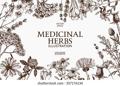 Vector design with hand drawn herbs. Decorative background with vintage medicinal herbs sketch.