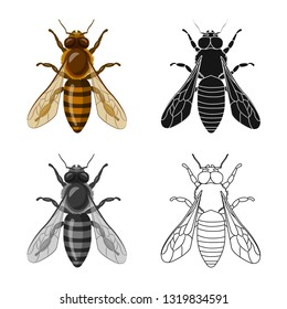 Vector design of insect and fly icon. Collection of insect and bee stock vector illustration.