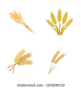 Vector design of wheat and stalk logo. Set of wheat and grain stock vector illustration.