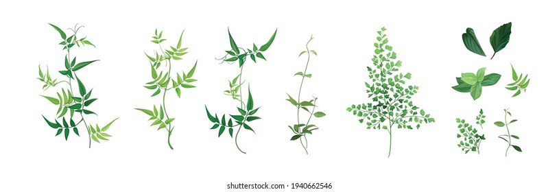 Vector designer elements set, collection. Green forest fern, tropical green smilax foliage, jasmine vine greenery, herbs. Beautiful watercolor style editable art illustration for wedding invite design