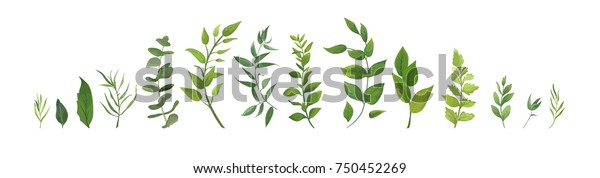 Vector designer elements set collection of green forest fern, tropical green eucalyptus greenery art foliage natural leaves herbs in watercolor style. Decorative beauty elegant illustration for design