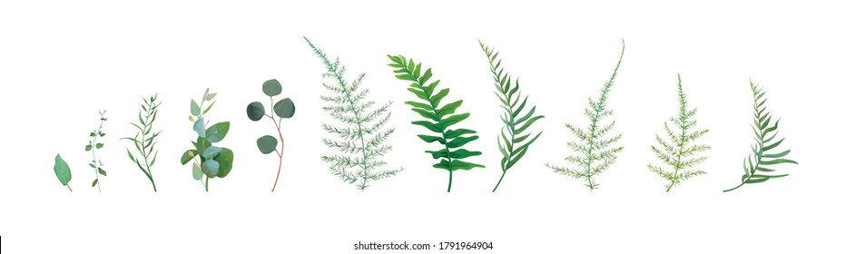 Vector designer watercolor style elements set, collection of green forest asparagus fern, green eucalyptus greenery art foliage natural leaves herbs. Decorative, beauty elegant illustration for design