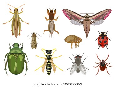 Vector detailed set of different insects isolated in flat style on white background. In collection: grasshopper, moth, ladybug, wasp, fly, mite, flea, moth, gryllotalpa.