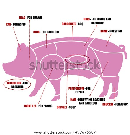 Artery Diagram Pork Opinions About Wiring Diagram