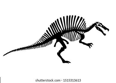 Vector Dinosaur Spinosaurus Skeleton Silhouette Illustration Isolated