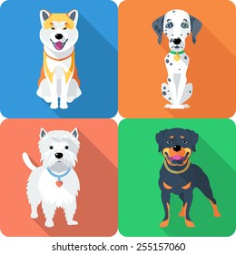 Vector dog Akita Inu,  Dalmatian, Rottweiler and West Highland White Terrier breed face icon flat design