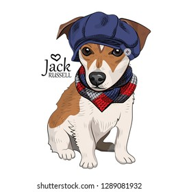 Vector dog with blue hat and checkered knitted scarf. Hand drawn illustration of dressed Jack Russell terrier.