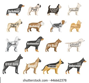 Vector dog breeds illustration with names and personality description