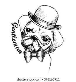 Vector dog is a gentleman. Dog in bowler hat with eyeglasses. ,
