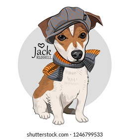 Vector dog with grey hat and knitted scarf. Hand drawn illustration of dressed Jack Russell terrier.