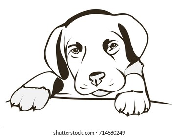 Vector dog isolated on a white background.