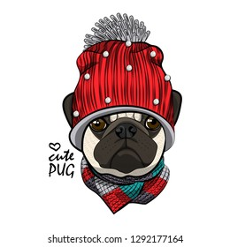 Vector dog with red knitted hat and knitted scarf. Hand drawn illustration of dressed pug.