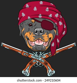 Vector Dog Rottweiler Pirate with pistols, wearing red bandana and eye patch