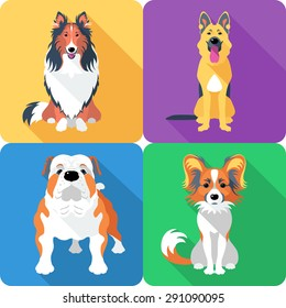 Vector dog Rough collie, Papillon, German shepherd and English Bulldog breed face icon flat design