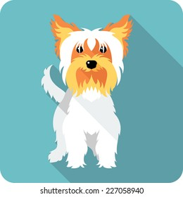 Vector dog Yorkshire terrier standing  icon flat design