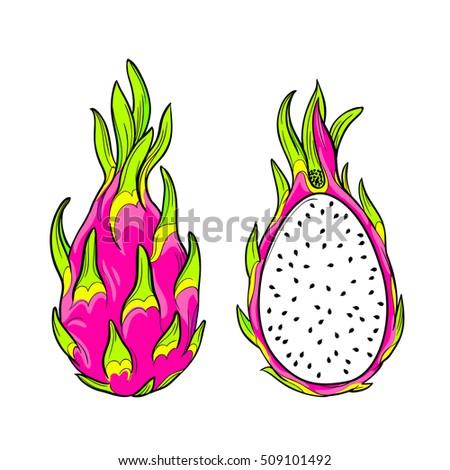 vector dragon fruit isolated editable objects stock vector royalty
