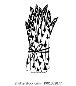 Vector drawing of asparagus pods and stems, tied in a bundle of young asparagus shoots, black and white graphics, delicious healthy natural vegetable, hand-drawn, natural eco-product, vegetarianism.