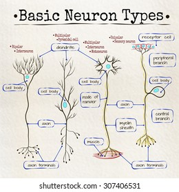 vector drawing basic types of neurons